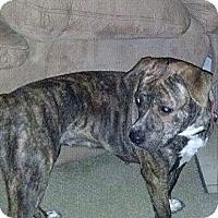 Adopt A Pet :: Lucy - McKeesport, PA