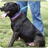 Adopt A Pet :: Tarzan - Carencro, LA