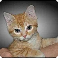 Adopt A Pet :: Perry - Montgomery, IL