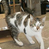 Adopt A Pet :: Skipper - Leamington, ON