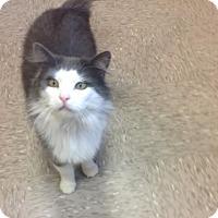 Adopt A Pet :: Gizmo - Byron Center, MI