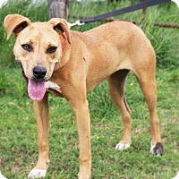 Adopt A Pet :: Millie - Natchitoches, LA