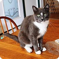 Adopt A Pet :: Jerry Garcia - Nolensville, TN