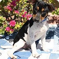 Adopt A Pet :: phonexay - Gilbert, AZ
