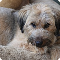 Adopt A Pet :: Cornwall - Norwalk, CT
