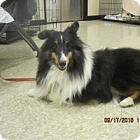 Adopt A Pet :: Eddie - apache junction, AZ