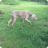 Adopt A Pet :: Myles - Grand Haven, MI
