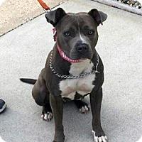 Adopt A Pet :: Mya - Cary, IL