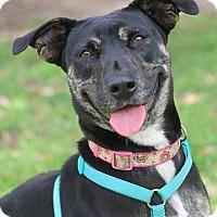 Adopt A Pet :: Christy - San Antonio, TX