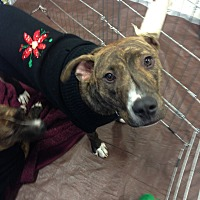 Adopt A Pet :: Beau - East Rockaway, NY