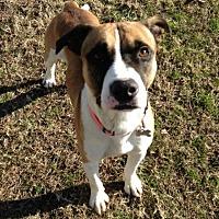 Adopt A Pet :: 1706-1523 Mojo - Virginia Beach, VA
