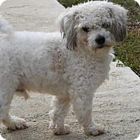 Adopt A Pet :: Mikie - Gulfport, MS