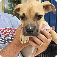 Adopt A Pet :: Ricky (Wendy- Blossvale) - Blossvale, NY