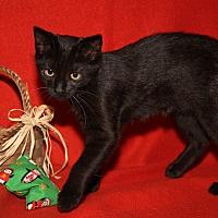Adopt A Pet :: Wren - Marietta, OH