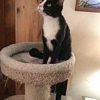 Adopt A Pet :: Romeo - Fayetteville, TN