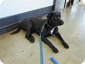 Labrador Retriever Mix Dog for adoption in LaGrange, Kentucky - DUTCHESS