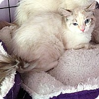 Adopt A Pet :: Paloma - Monroe, GA