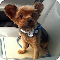 Adopt A Pet :: Millie - Bemidji, MN