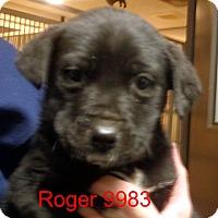 Adopt A Pet :: Roger - Greencastle, NC