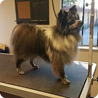Adopt A Pet :: Romeo - Santa Rosa, CA