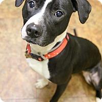 Adopt A Pet :: Gabourey Sidibe - Jersey City, NJ
