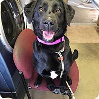 Adopt A Pet :: TAMI - Cadiz, OH