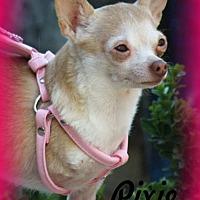 Adopt A Pet :: Pixie - Anaheim Hills, CA