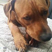 Adopt A Pet :: Mellyn - Aurora, CO