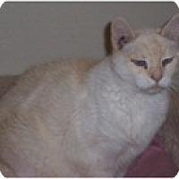 Adopt A Pet :: B.B. - El Cajon, CA