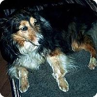 Adopt A Pet :: keisha - Alderson, WV