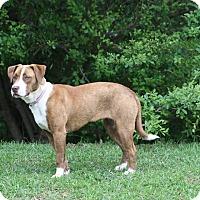 Adopt A Pet :: Genna - North Haverhill, NH