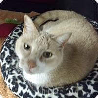 Adopt A Pet :: Nacho - Byron Center, MI