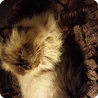 Adopt A Pet :: Hershey - Columbus, OH