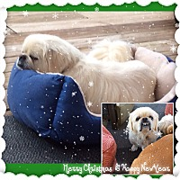 Adopt A Pet :: Paca - San Antonio, TX
