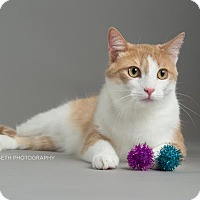 Adopt A Pet :: Vincent - Plymouth, MN