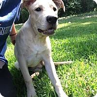 Adopt A Pet :: Haggard - Loganville, GA