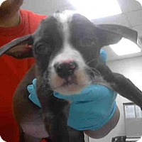 Adopt A Pet :: MARY - Conroe, TX