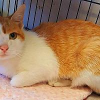 Adopt A Pet :: Suzy - Wapakoneta, OH