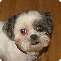Adopt A Pet :: Cash - Allentown, PA