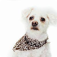 Adopt A Pet :: Blair - New Castle, PA