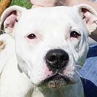 Adopt A Pet :: Aubrey - LaHarpe, KS