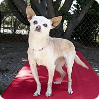 Adopt A Pet :: Haley - Santa Barbara, CA
