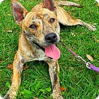 Adopt A Pet :: Roxie - N - Huntington, NY