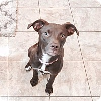 Adopt A Pet :: Remi *Courtesy Post* - Sherburne, NY
