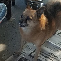Adopt A Pet :: Baby - Walthill, NE