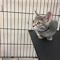 Adopt A Pet :: Valeria - Pendleton, NY