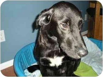 Labrador Retriever Mix Dog for adoption in San Diego, California - MIRACLE