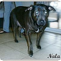 Adopt A Pet :: Nala - Silsbee, TX