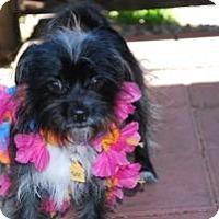 Adopt A Pet :: Tina Turner - New Milford, CT