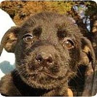 Adopt A Pet :: Dot - Plainfield, CT